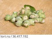 Неочищенные лесные орехи на пне. Стоковое фото, фотограф Елена Коромыслова / Фотобанк Лори