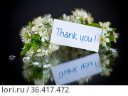 thank you card and blooming spring branch with flowers. Стоковое фото, фотограф Peredniankina / Фотобанк Лори