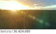 Flight above rural summer landscape with endless yellow field at sunny summer evening. Agricultural farmland at autumn sunrise. Стоковое видео, видеограф Александр Маркин / Фотобанк Лори