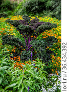 Blumenbeet im Schloßgarten Siegen. Стоковое фото, фотограф Zoonar.com/Dr. Lange / easy Fotostock / Фотобанк Лори