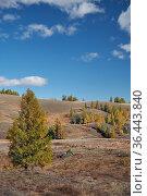 Eshtykel plateau with larch forest in autumn season. Стоковое фото, фотограф Serg Zastavkin / Фотобанк Лори