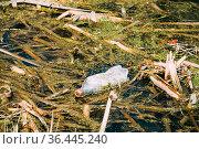Old Plastic Bottle Floats In Water Of Swamp Or Bog. Used Empty Bottle... Стоковое фото, фотограф Ryhor Bruyeu / easy Fotostock / Фотобанк Лори