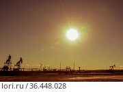 Oil pumps in the oil field. Summer hot sunny day. Seagulls soaring... Стоковое фото, фотограф Zoonar.com/BASHTA / easy Fotostock / Фотобанк Лори