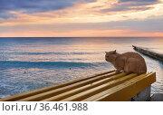 Рыжий кот сидит на лавочке, на берегу моря, на закате. Стоковое фото, фотограф Dmitry29 / Фотобанк Лори