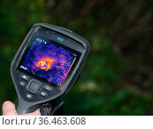 Thermal imager used to confirm there is a Hedgehog (Erinaceus europaeus) hidden in a nest where a sniffer dog has indicated it has found one, Hartpury... Стоковое фото, фотограф Nick Upton / Nature Picture Library / Фотобанк Лори
