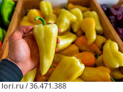 Man's hand holding a bright yellow pepper, selected from a wooden... Стоковое фото, фотограф Zoonar.com/VALMEDIA / easy Fotostock / Фотобанк Лори