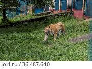 Bangladesh zoo has opened to visitors amid Delta variant of Covid... Редакционное фото, фотограф Eyepix / WENN / age Fotostock / Фотобанк Лори