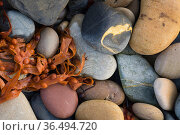 Pebbles on the beach, Taracliff Bay, Mainland, Orkney Isles, Scotland. October 2020. Стоковое фото, фотограф David Noton / Nature Picture Library / Фотобанк Лори