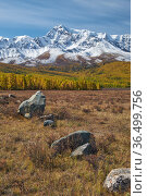 Autumn highland landscape. Picturesque boulders are on foreground and larch forest with snow mountains are on background. Стоковое фото, фотограф Serg Zastavkin / Фотобанк Лори