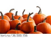 Many orange pumpkins on white. Стоковое фото, фотограф Иван Михайлов / Фотобанк Лори
