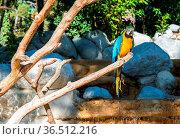 Blue-and-yellow macaw (Ara ararauna), Macaw parrot. Стоковое фото, фотограф Zoonar.com/Morad HEGUI / easy Fotostock / Фотобанк Лори
