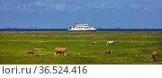 Tiere auf einer Fenne mit einem Schiff auf der Nordsee im Hintergrund... Стоковое фото, фотограф Zoonar.com/Stefan Ziese / age Fotostock / Фотобанк Лори