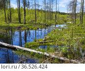 Brook Oelbach near wetland area Grosser Filz and Klosterfilz in the... Стоковое фото, фотограф Martin Zwick / age Fotostock / Фотобанк Лори