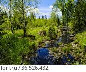Wetlands Grosser Filz, drainage channel, also used to drift wood, ... Стоковое фото, фотограф Martin Zwick / age Fotostock / Фотобанк Лори