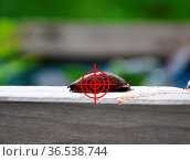 Zielen auf Nacktschnecke im Garten - Aim at slug in garden. Стоковое фото, фотограф Zoonar.com/lantapix / easy Fotostock / Фотобанк Лори