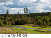 Spruce park with asphalt walkway, Moscow, Russia. Стоковое фото, фотограф Володина Ольга / Фотобанк Лори