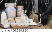 Image of fresh dairy products on the table on the farm against the background of cows. Стоковое видео, видеограф Яков Филимонов / Фотобанк Лори