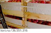 Boxes with apples close-up. Стоковое видео, видеограф Kozub Vasyl / Фотобанк Лори