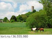 Burg Hartenfels , Westerwald, burg, hartenfels, schmanddippe, ruine... Стоковое фото, фотограф Zoonar.com/Volker Rauch / easy Fotostock / Фотобанк Лори