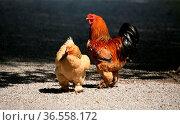 Schönes Paar. Стоковое фото, фотограф Zoonar.com/Martina Berg / easy Fotostock / Фотобанк Лори