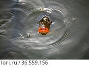 Mal gucken, was da los ist... Стоковое фото, фотограф Zoonar.com/Martina Berg / easy Fotostock / Фотобанк Лори