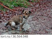 Terrier im Dreck. Стоковое фото, фотограф Zoonar.com/Martina Berg / easy Fotostock / Фотобанк Лори