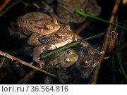 Ziemlich voll in dem Teich... Стоковое фото, фотограф Zoonar.com/Martina Berg / easy Fotostock / Фотобанк Лори