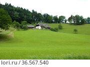 Alm, Wiesen, Schwarzwald. Стоковое фото, фотограф Zoonar.com/Manfred Ruckszio / easy Fotostock / Фотобанк Лори