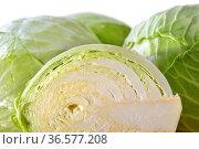Frisch geerntetes Weißkraut vor weissem Hintergrund - German cabbage... Стоковое фото, фотограф Zoonar.com/Karl Allgaeuer / easy Fotostock / Фотобанк Лори