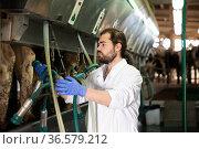 Milkmaid man working with automatical cow milking machines. Стоковое фото, фотограф Яков Филимонов / Фотобанк Лори