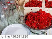 Johannisbeeren, Zucker und Bügelverschlussflaschen. Стоковое фото, фотограф Zoonar.com/Thomas Klee / easy Fotostock / Фотобанк Лори