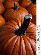 Orange pumpkins collection. Стоковое фото, фотограф Иван Михайлов / Фотобанк Лори