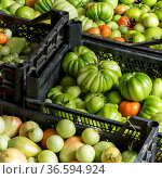 Harvest of fresh tomatoes in crates stacked on the floor. Стоковое фото, фотограф Евгений Харитонов / Фотобанк Лори