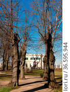 Bäume im Schloßpark Glienicke. Стоковое фото, фотограф Zoonar.com/Karl Heinz Spremberg / age Fotostock / Фотобанк Лори
