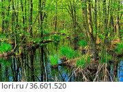 Sumpf - swamp 03. Стоковое фото, фотограф Zoonar.com/Liane Matrisch / easy Fotostock / Фотобанк Лори