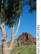 Berg , Santa Lucia, Gran Canaria, baum, kanaren, kanarische inseln... Стоковое фото, фотограф Zoonar.com/Volker Rauch / easy Fotostock / Фотобанк Лори