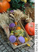 Herbstlich, Stillleben, herbst, kürbis, kürbisse,korb,blume, blumen... Стоковое фото, фотограф Zoonar.com/Volker Rauch / easy Fotostock / Фотобанк Лори