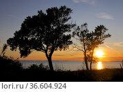 Sonnenuntergang, baum, bäume, zwei, abend, küste, sonne, abends, abendsonne... Стоковое фото, фотограф Zoonar.com/Volker Rauch / easy Fotostock / Фотобанк Лори