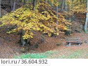 Bank, ruhe, herbstwald, Herbst, baum, buche, buchen, buchenwald, blatt... Стоковое фото, фотограф Zoonar.com/Volker Rauch / easy Fotostock / Фотобанк Лори