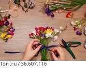 Florist at work. Woman making bouquet of spring freesia flowers. Стоковое фото, фотограф Zoonar.com/Dasha Petrenko / easy Fotostock / Фотобанк Лори