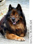 ZON-3994670. Стоковое фото, фотограф Zoonar.com/heinrich fuchs / age Fotostock / Фотобанк Лори
