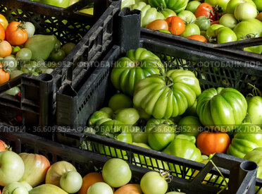 Harvest of fresh tomatoes in crates stacked on the floor