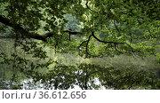 Asch-See im Weltkulturerbe Bergpark Wilhelmshoehe in Kassel, 17.7... Стоковое фото, фотограф Zoonar.com/Robert B. Fishman / age Fotostock / Фотобанк Лори