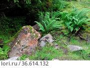Fels, felsen, farn, farnkraut, stein, steine, bergwald, gebirge, hochgebirge... Стоковое фото, фотограф Zoonar.com/Volker Rauch / easy Fotostock / Фотобанк Лори