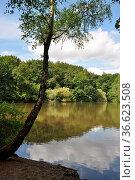 Maunzenweiher, Frankfurt, weiher, se. teich, wald, waldsee, natur... Стоковое фото, фотограф Zoonar.com/Volker Rauch / easy Fotostock / Фотобанк Лори