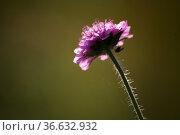 Blüte mit Besucher im Gegenlicht. Стоковое фото, фотограф Zoonar.com/Martina Berg / easy Fotostock / Фотобанк Лори