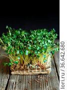 Close-up of Daikon microgreens with seeds and roots on the Jute Microgreens... Стоковое фото, фотограф Zoonar.com/NATALIIA ZHEKOVA / easy Fotostock / Фотобанк Лори