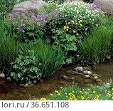 Gartenteich, Wasser, Wasserpflanze, Wasserlauf, Стоковое фото, фотограф Zoonar.com/Manfred Ruckszio / age Fotostock / Фотобанк Лори