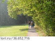 Weg, Waldrand, wanderweg, wald, wiese, landschaft, fußweg, baum, bäume... Стоковое фото, фотограф Zoonar.com/Volker Rauch / easy Fotostock / Фотобанк Лори