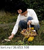 Pilzsammlerin, Pilze sammeln, Pilze, Korb. Стоковое фото, фотограф Zoonar.com/Manfred Ruckszio / age Fotostock / Фотобанк Лори